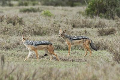 Samburu-Sweetwater-02823.jpg