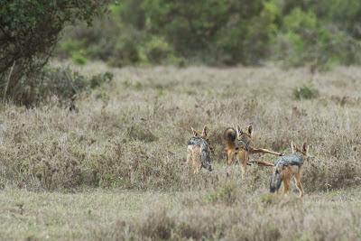 Samburu-Sweetwater-02827.jpg