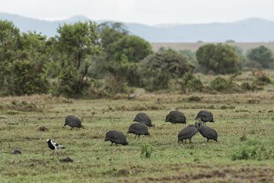 Samburu-Sweetwater-02864.jpg