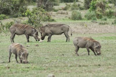 Samburu-Sweetwater-02874.jpg