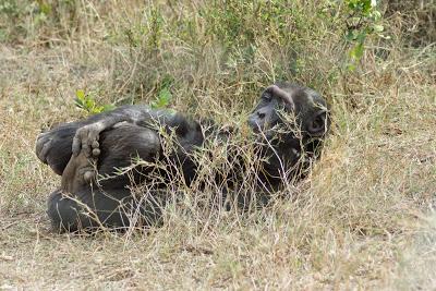 Samburu-Sweetwater-02887.jpg