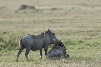 Samburu-Sweetwater-02913.jpg