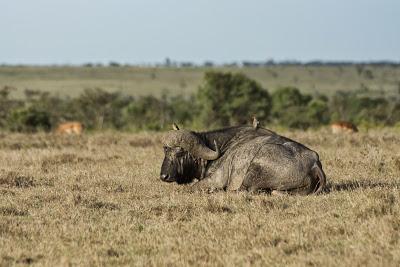 Samburu-Sweetwater-02927.jpg
