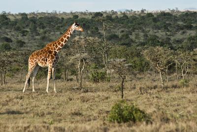 Samburu-Sweetwater-02932.jpg