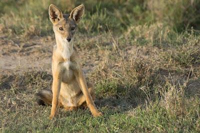 Samburu-Sweetwater-02934.jpg