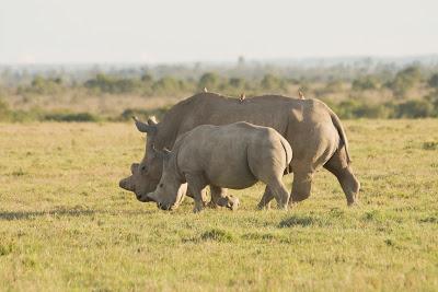 Samburu-Sweetwater-02941.jpg