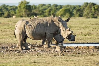 Samburu-Sweetwater-02948.jpg