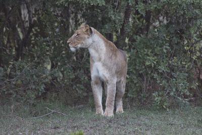Samburu-Sweetwater-02958.jpg