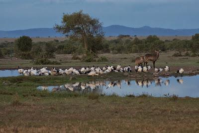 Samburu-Sweetwater-02961.jpg