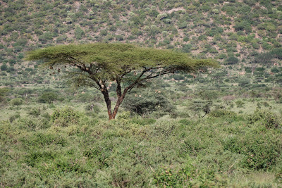 Samburu-Sweetwater-1120642.jpg