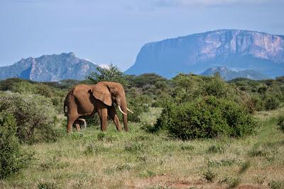 Samburu-Sweetwater-1120643.jpg