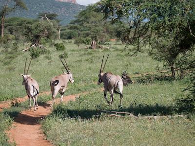 Samburu-Sweetwater-1120646.jpg