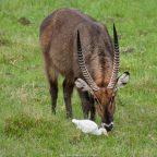 Reisebericht Kenia 2014 – Teil 4: Von Samburu nach Ol Pajeta