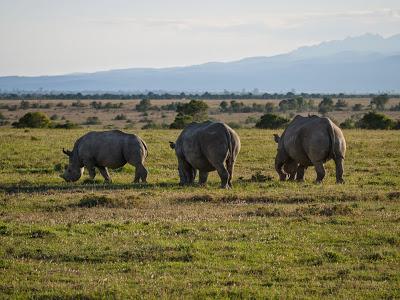 Samburu-Sweetwater-1120729.jpg