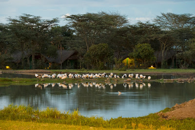 Samburu-Sweetwater-1120746.jpg