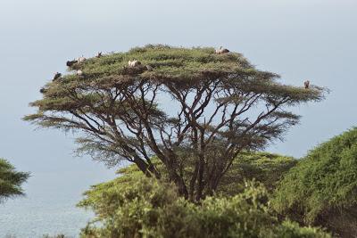 Amboseli-03325.jpg