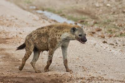 Amboseli-03333.jpg