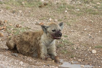Amboseli-03335.jpg