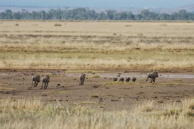 Amboseli-03351.jpg
