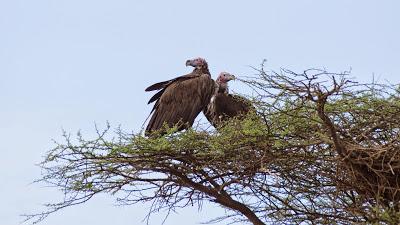 Amboseli-03355.jpg