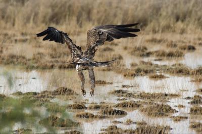 Amboseli-03359.jpg