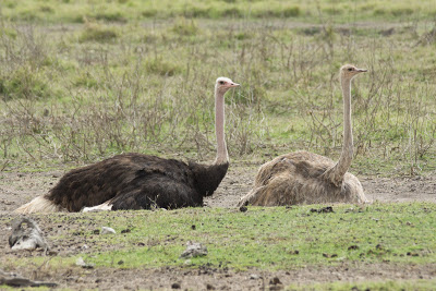 Amboseli-03376.jpg
