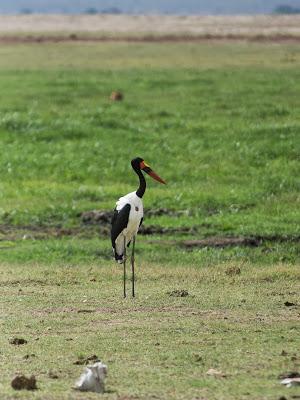 Amboseli-03382.jpg