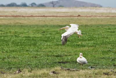 Amboseli-03391.jpg