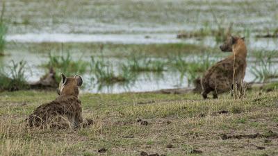 Amboseli-03400.jpg