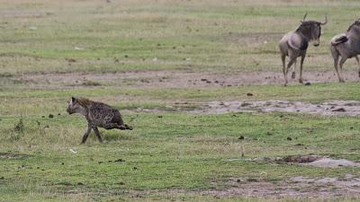 Amboseli-03401.jpg