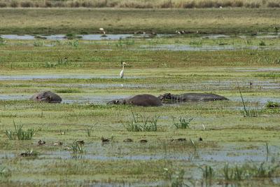 Amboseli-03417.jpg