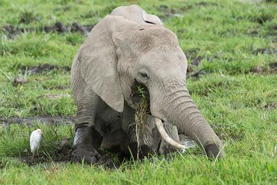Amboseli-03432.jpg