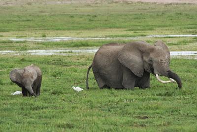Amboseli-03439.jpg