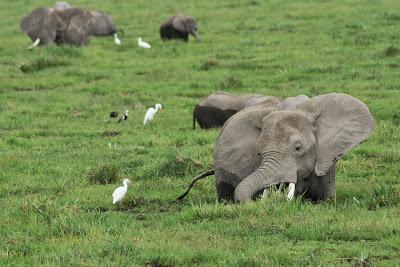 Amboseli-03454.jpg