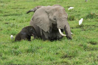 Amboseli-03463.jpg
