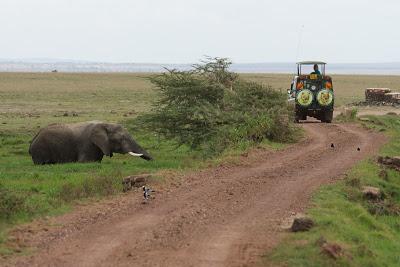 Amboseli-03471.jpg
