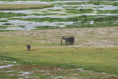 Amboseli-03479.jpg