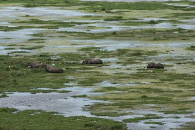 Amboseli-03483.jpg