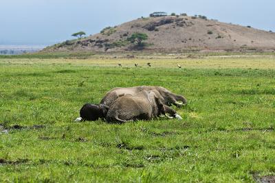 Amboseli-03503.jpg