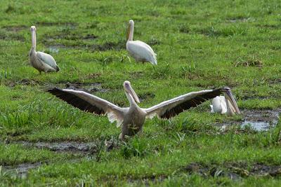 Amboseli-03508.jpg