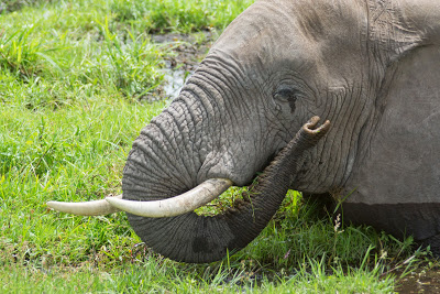 Amboseli-03512.jpg