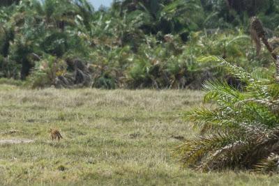Amboseli-03528.jpg
