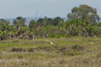 Amboseli-03540.jpg