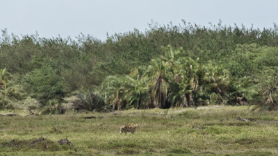 Amboseli-03553.jpg