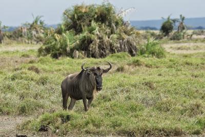 Amboseli-03556.jpg