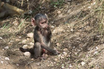 Amboseli-03571.jpg