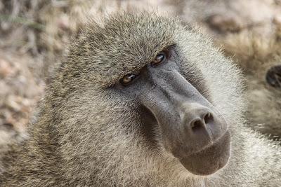 Amboseli-03579.jpg