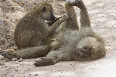 Amboseli-03605.jpg