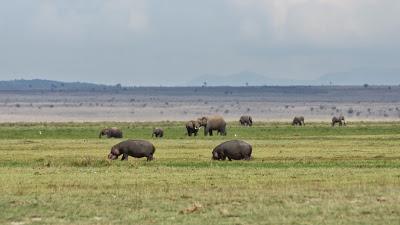 Amboseli-03611.jpg