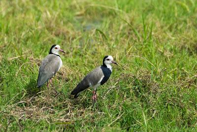 Amboseli-03612.jpg